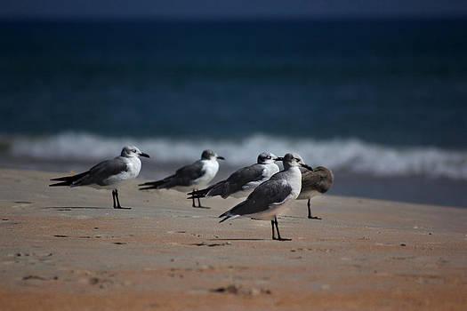 Seagulls by George Ferreira