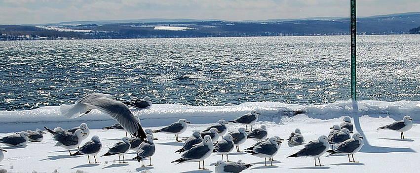 Linda Rae Cuthbertson - Seagulls in Winter Wonderland
