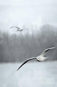 Seagulls by Jelena Jovanovic