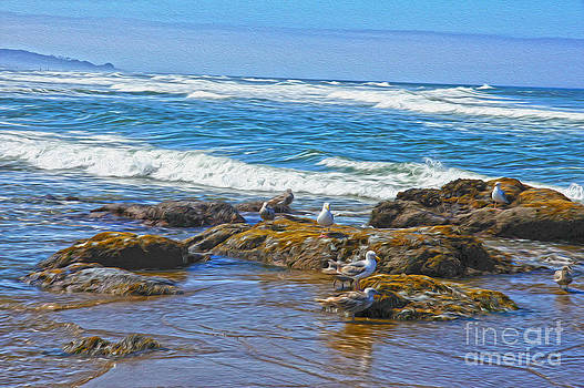 Seagulls by Nur Roy