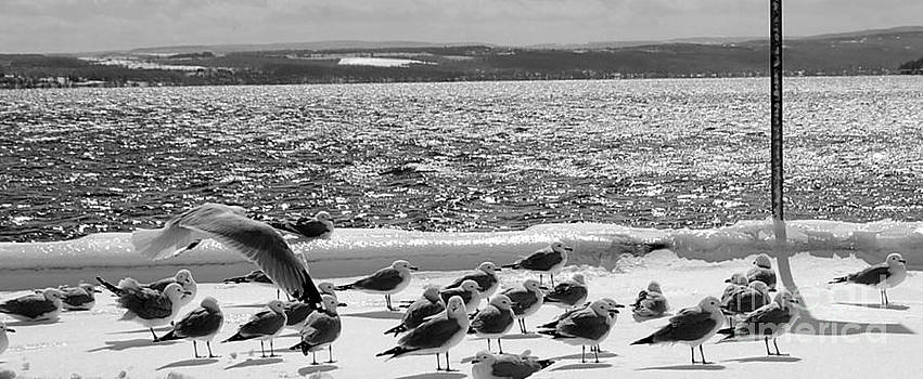 Seagulls on Ice by Linda Rae Cuthbertson