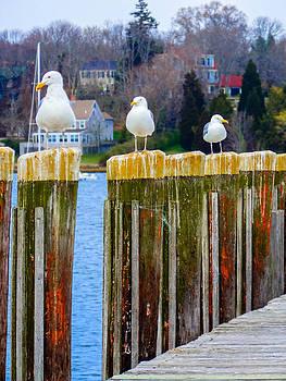 Seagulls Poles by Heather Sylvia