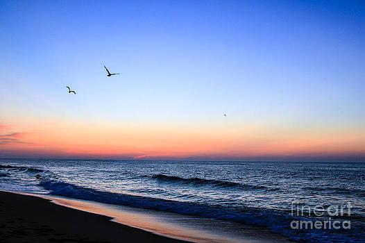 Brenda Giasson - Seagulls Sunrise Flight