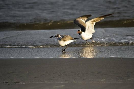 Seagulls by Teresa Dixon