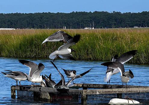 Seagulls by Wanda J King