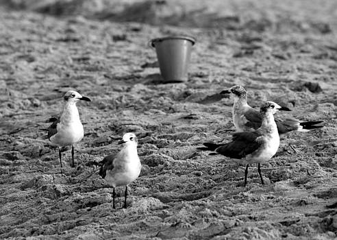 Seagulls with Pail by Brandi Perry