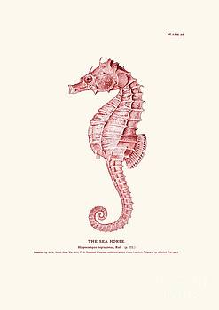Seahorse pink vintage by Patruschka Hetterschij