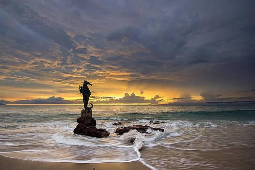 Seahorse by Shanti Gilbert