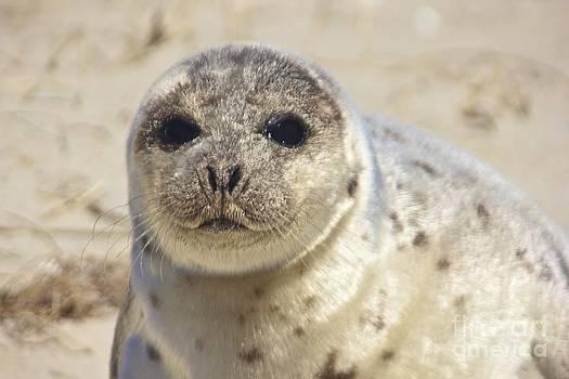 Amazing Jules - Seal
