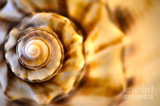 Seashell by Christian LeBlanc