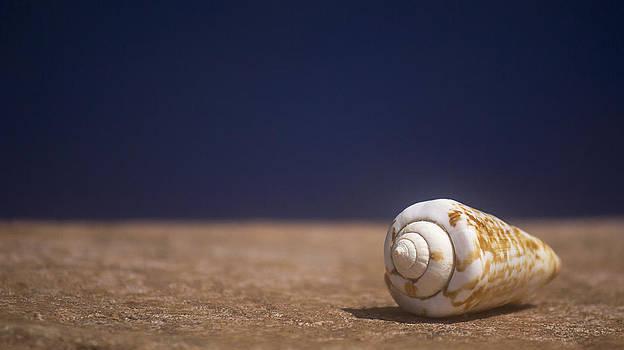 Seashell I by Carl Christensen