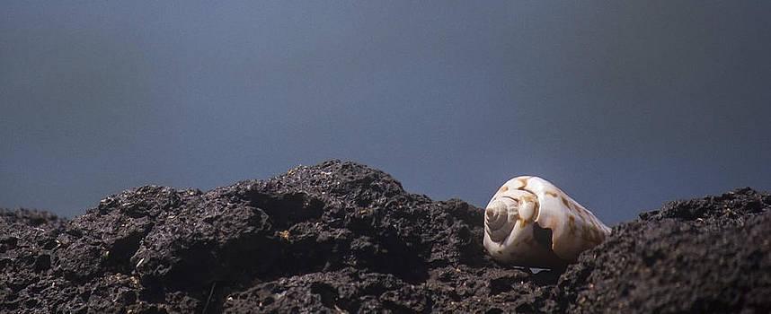 Seashell II by Carl Christensen