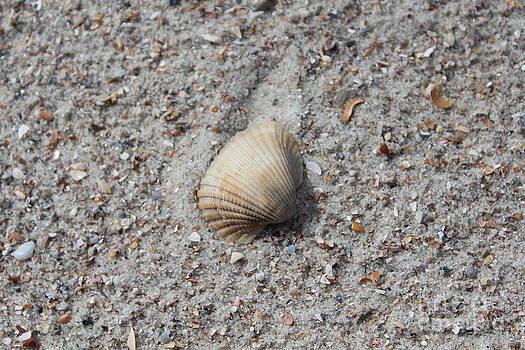 Seashell by Joanne Askew