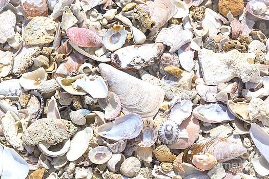 Seashells background by Christina Rahm
