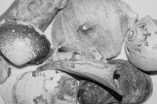 Seashells by Brandi Perry