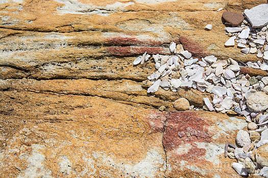Seashells on rock by Christina Rahm