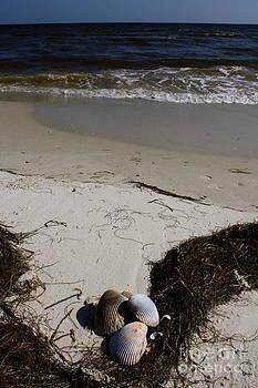 Danielle Groenen - Seashells on the Seashore