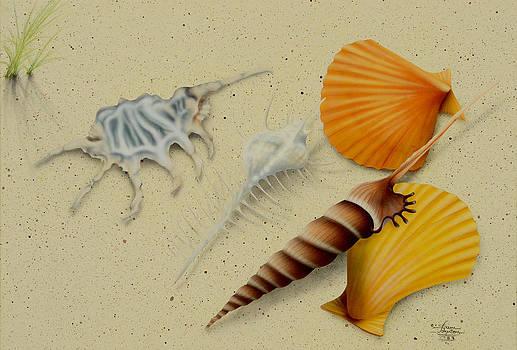 Sam Davis Johnson - Seashells