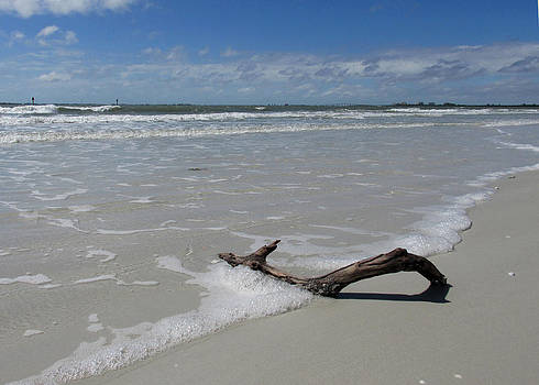 Seashore Driftwood by Rosie Brown