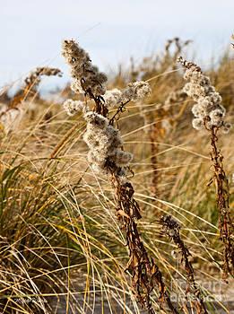 Michelle Wiarda-Constantine - Seaside Floral