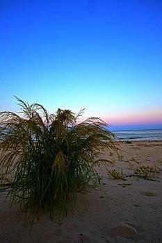 Regina  Williams  - Seaside