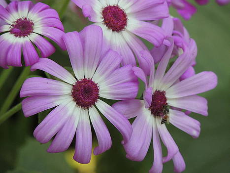 Seasonal Flower-1 by Ramesh Chand