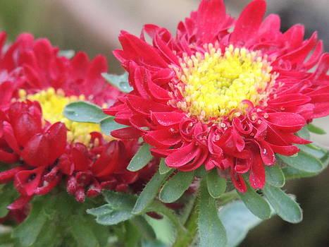 Seasonal Flower-10 by Ramesh Chand