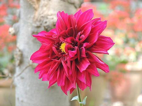 Seasonal Flower-11 by Ramesh Chand