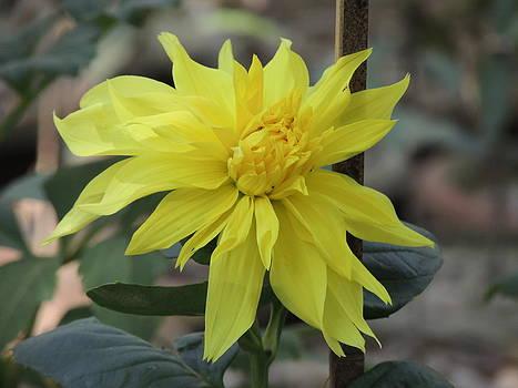 Seasonal Flower-12 by Ramesh Chand