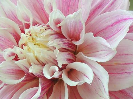 Seasonal Flower-14 by Ramesh Chand