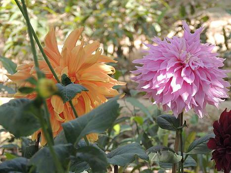 Seasonal Flower-15 by Ramesh Chand