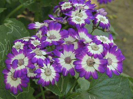 Seasonal Flower-2 by Ramesh Chand