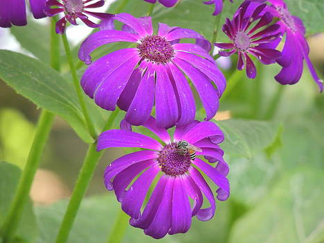 Seasonal Flower-3 by Ramesh Chand