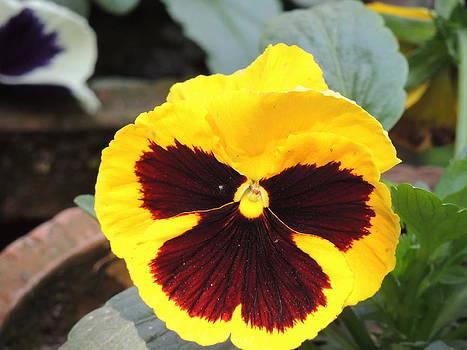 Seasonal Flower-4 by Ramesh Chand