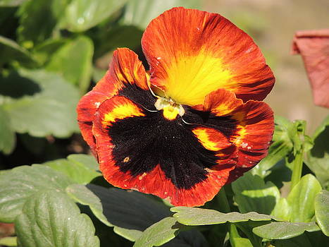 Seasonal Flower-5 by Ramesh Chand