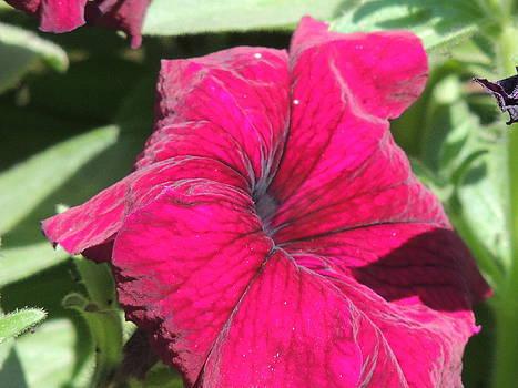 Seasonal Flower-8 by Ramesh Chand