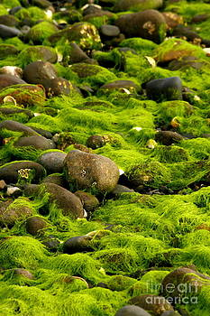 Seaweed and Rocks 1 by Roger Soule