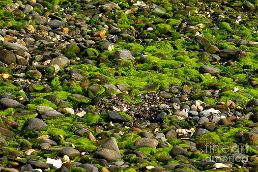 Seaweed and Rocks 3 by Roger Soule