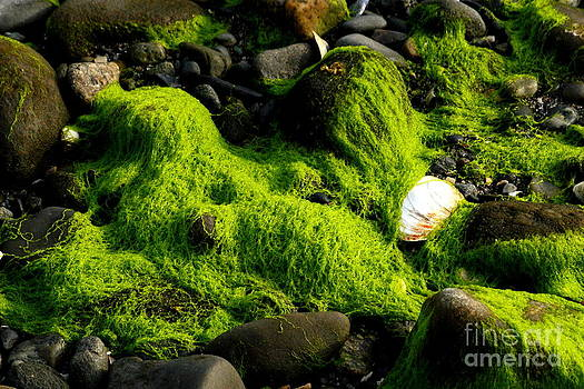 Seaweed and Rocks 4 by Roger Soule