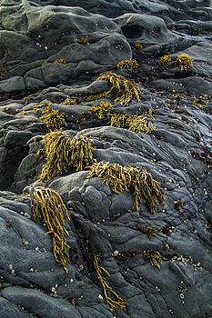 Roger Mullenhour - Seaweed and Rocks