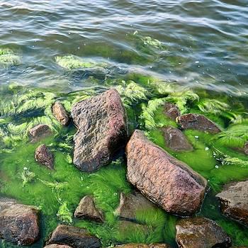 Gynt - Seaweed