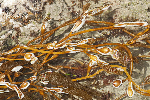 Artist and Photographer Laura Wrede - Seaweed Swirls