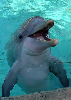 SeaWorld Dolphin by David Nicholls