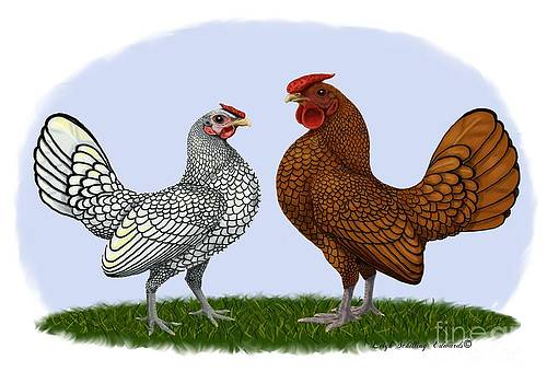 Sebright Rooster and Hen by Leigh Schilling