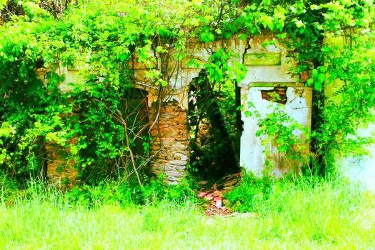 Secret Garden by Sarah E Kohara