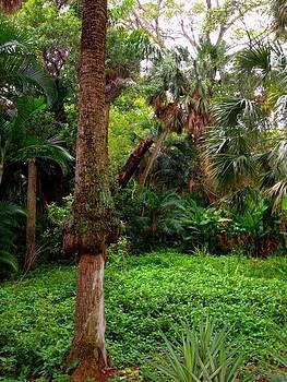 Secret Jungle Fort Lauderdale by Sierra Andrews