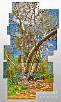 Gregory Dyer - Sedona Arizona Big Tree