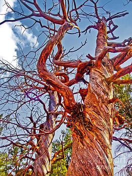 Gregory Dyer - Sedona Arizona Ghost Tree