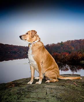 Sedona - Wonder Dog by Jim DeLillo