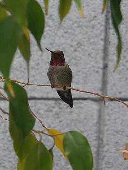 See the Birdie 1 by Davon Duncan